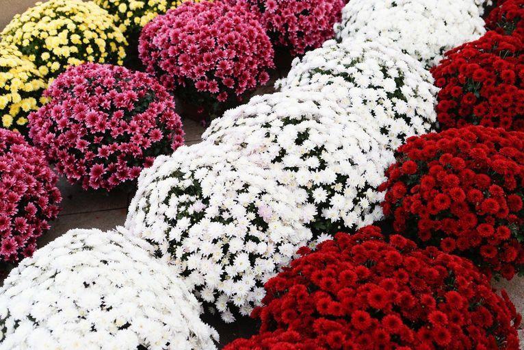 Żarów: Giełda kwiatów