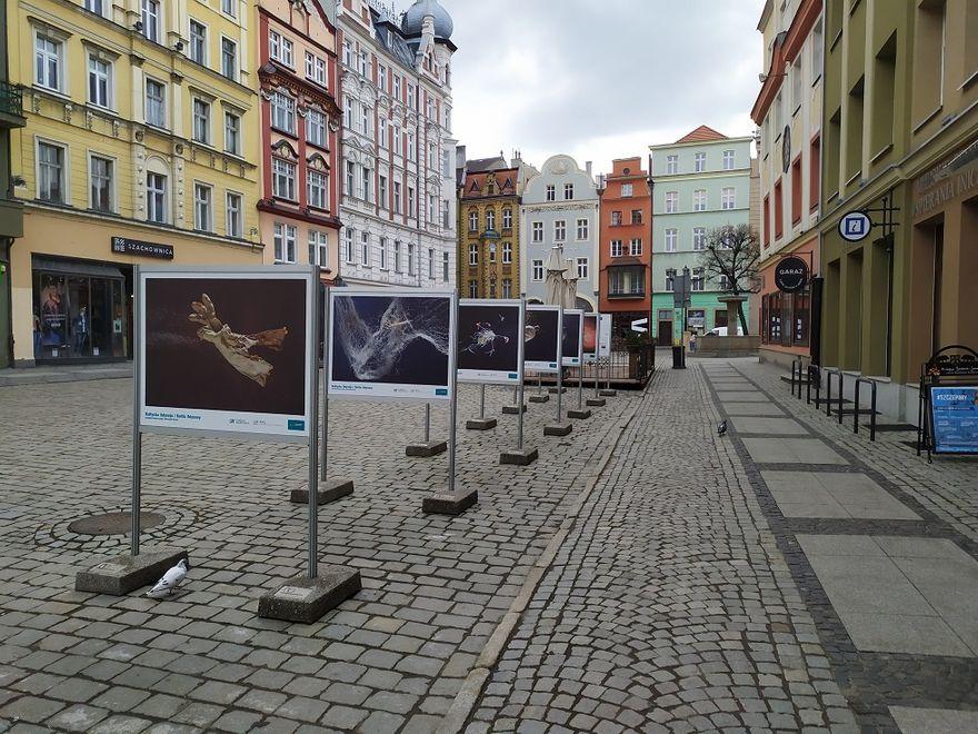 Świdnica: Skarby Bałtyku