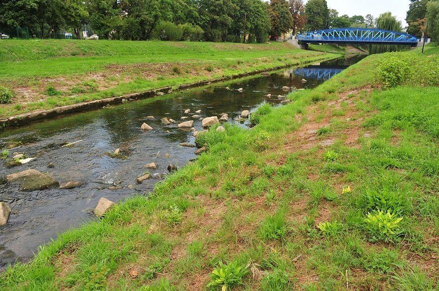 Świdnica: Zadbają o rzekę
