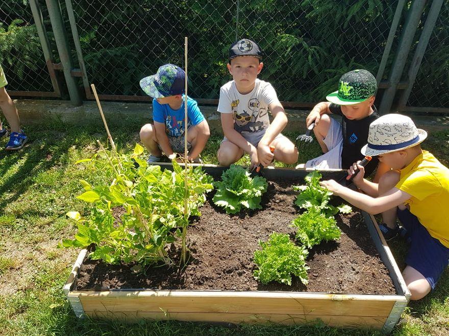 Bystrzyca Dolna: Uprawiają warzywniaki
